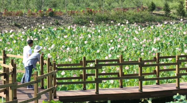 들꽃마을.jpg