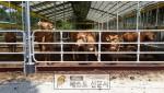 환절기 심한 일교차 극복을 위한 가축 관리.jpg