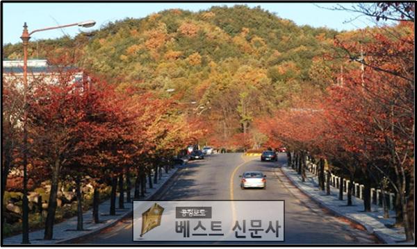 추억의 가을길(팔공산순환도로 왕벚나무).jpg