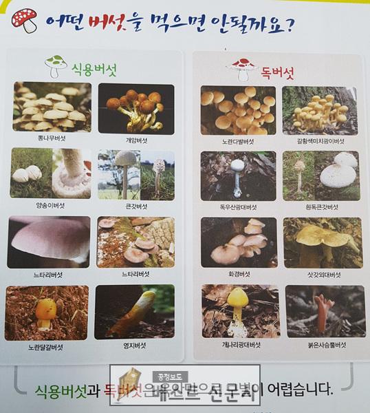 식용버섯과 독버섯).jpg