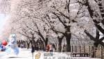 축제로 즐기자1(봄꽃축제).jpg