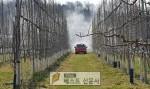 경북 영주시 농업기술센터(소장 김교영)는 과수화상병 2차 방제약제(아그렙토)를 과원 전체 …